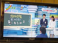 Tv_1241_3